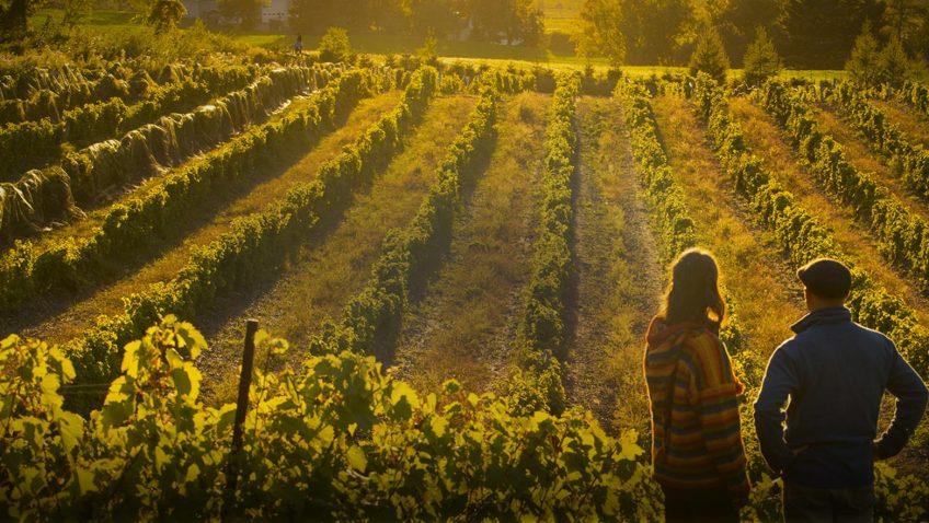 Portes ouvertes dans tous les vignobles de Brome-Missiquoi