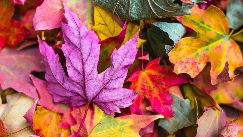 L'automne du Mont Sutton